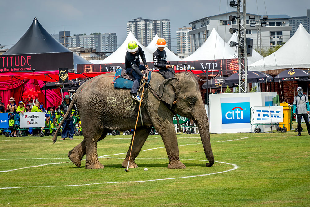 On the ball: An elephant enjoys the game as much as its riders.