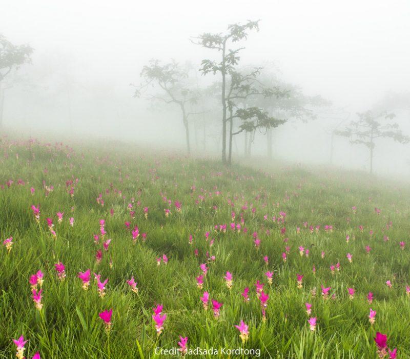 Dok Krachiao fields, Chaiyaphum province