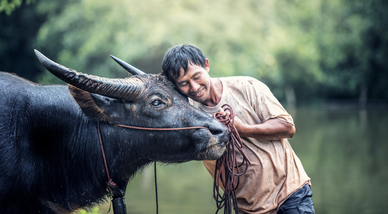 Saving the Water Buffaloes